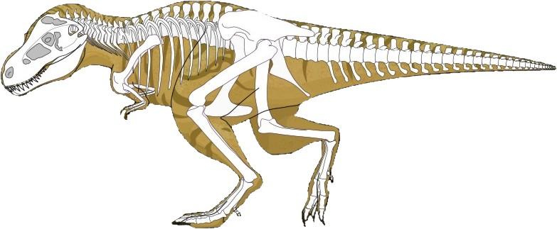 Тиринозавр, тиранозавр рекс