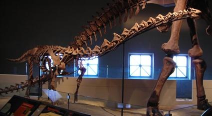 Картинки по запросу Рапетозавр фото